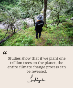 One Trillion Trees Donate